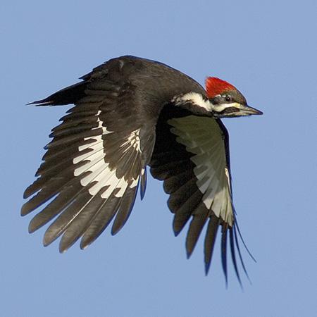 birding is fun!: photographing birds in flight tips