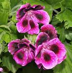 Flores Masónicas