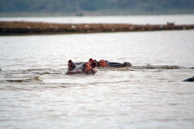 Hippo Lake Naivasha