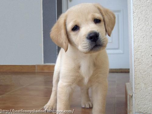 Nice cute puppy.