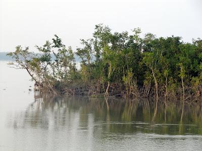 Sundarbans Delta Mangrove Forest Wildlife Bangladesh
