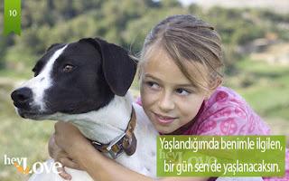 köpekler sevgi ister