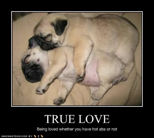puppy love quotes like success