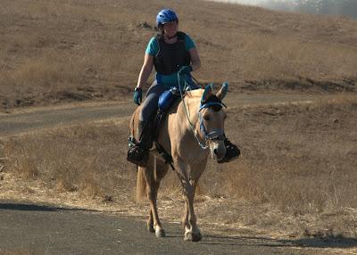 palomino endurance mule