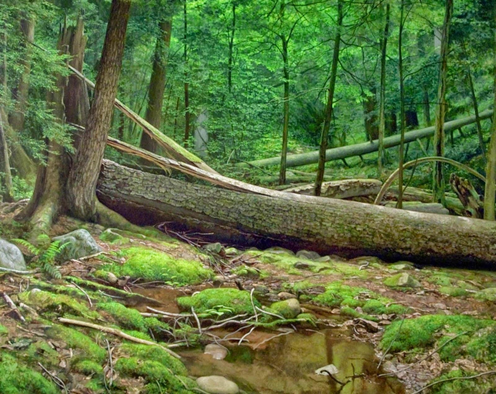 cuadros-al-oleo-de-paisajes-selvaticos-naturales
