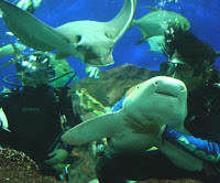 Underwater world of Singapore pict
