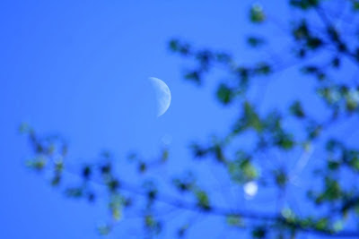 Royal Botanical Garden, Burlington: the moon :: All Pretty Things
