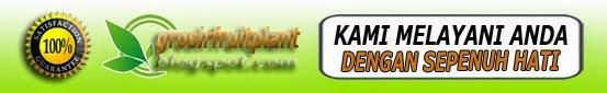 Fruit & Plant Usa Asli Murah Harga Grosir Bergaransi