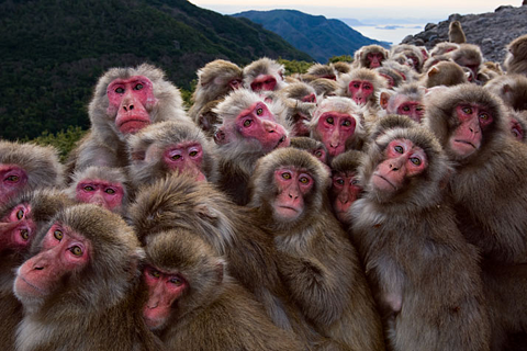 lots_of_monkeys.png
