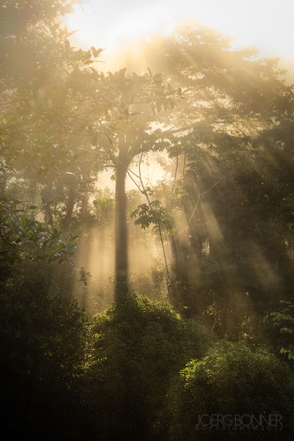 Tropical rainforest in backlit, misty conditions.