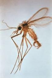 Le parasite 20 série anidub