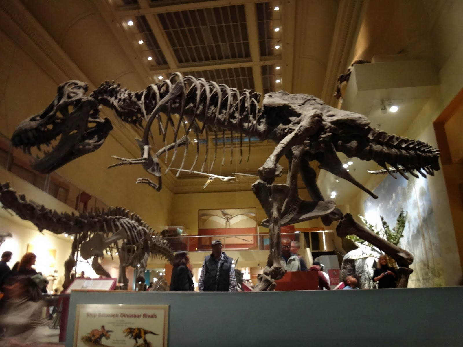 National Museum Of Natural History Washington DC Lense Moments - Historical museums in usa