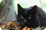 I Love Cats ^^