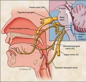 Penyakit Otak dan Syaraf