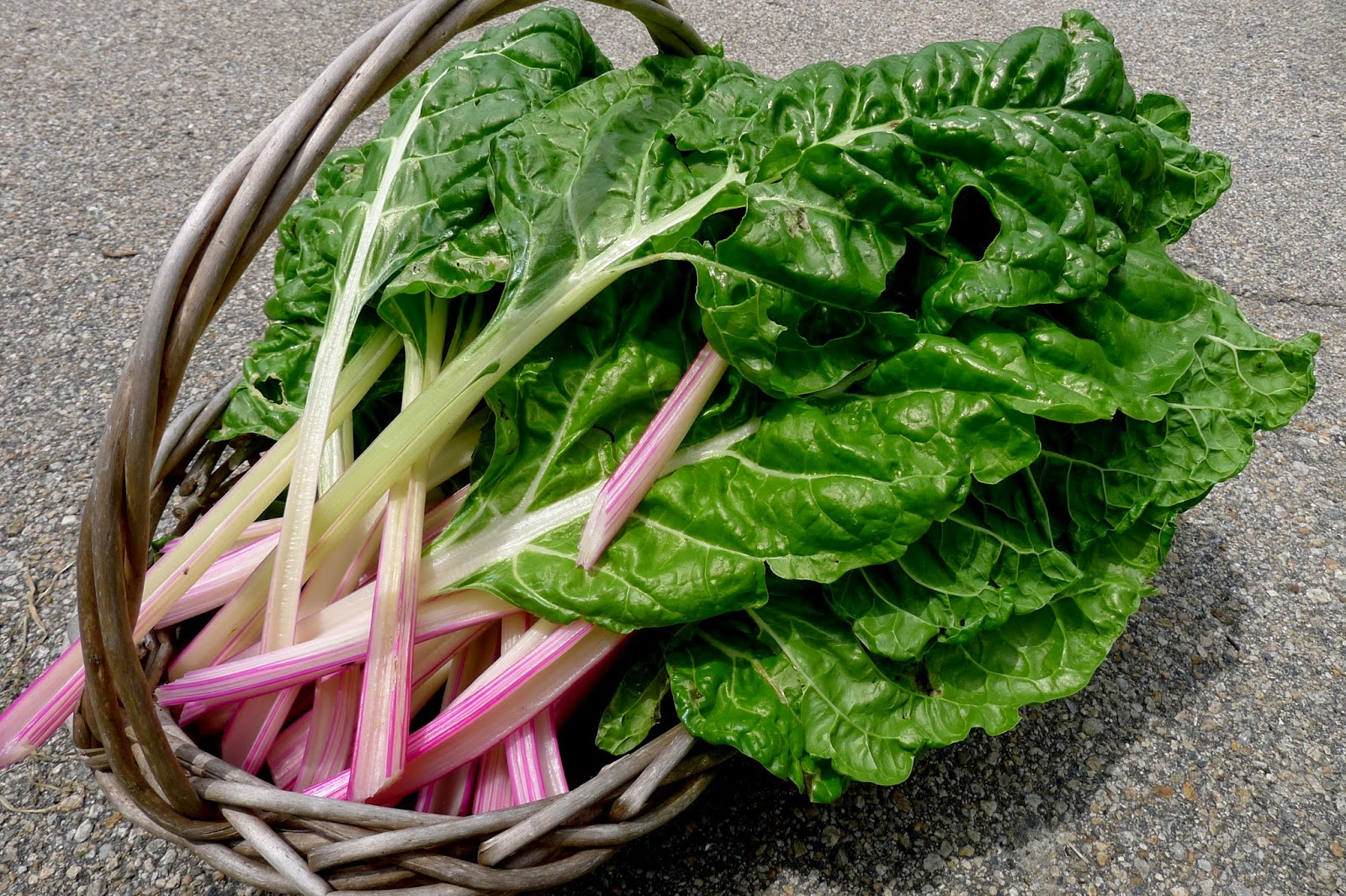 Peppermint Swiss Chard, preserving, blanching