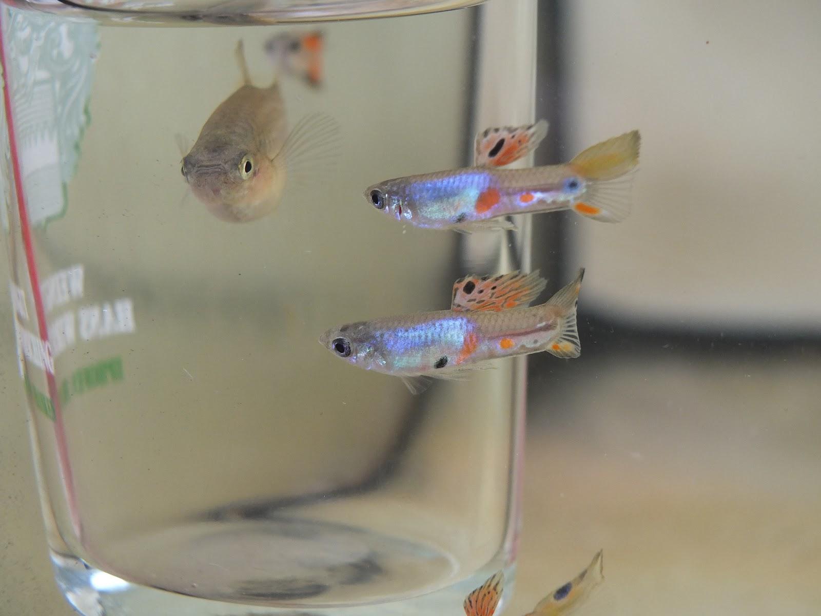 Сачок для аквариума своими руками фото 726