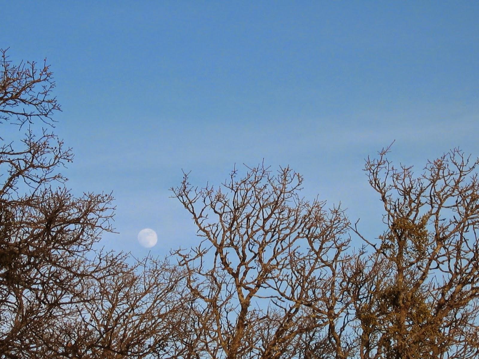 Full Moon, Mount Diablo Regional Park by Rachel Medanic