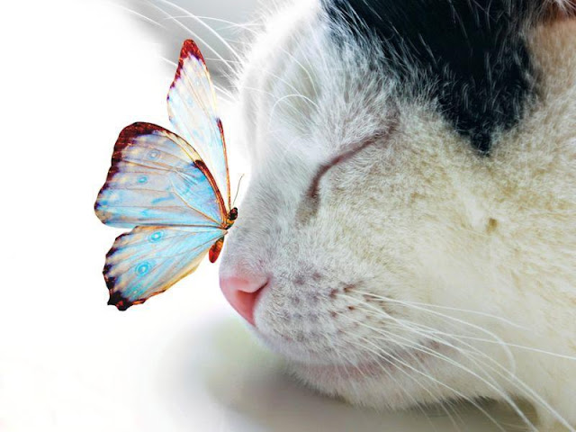 funny cat pictures, cat and butterfly