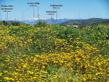 Panoràmica del Pirineu obtinguda des de la Carena del Pi Gordi