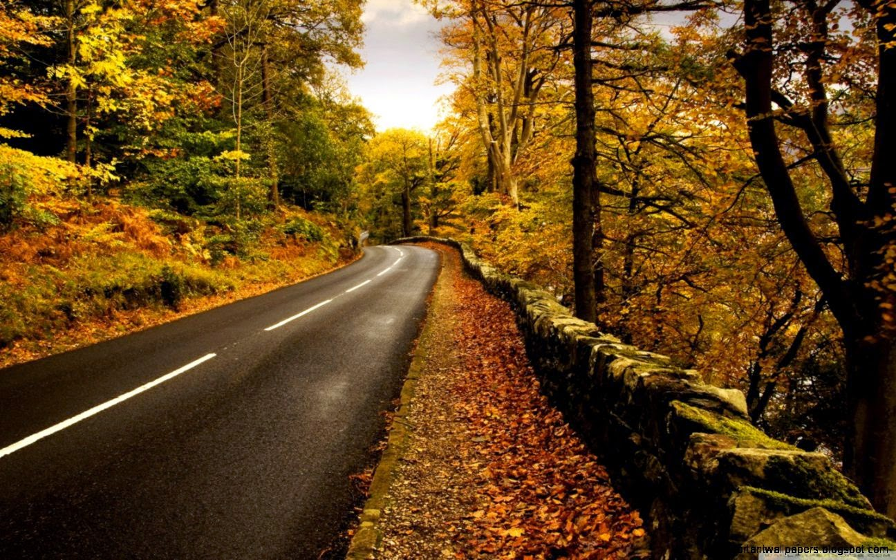 autumn road full hd wallpaper | important wallpapers