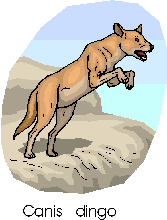 Canis Dingo Free Animal Clipart