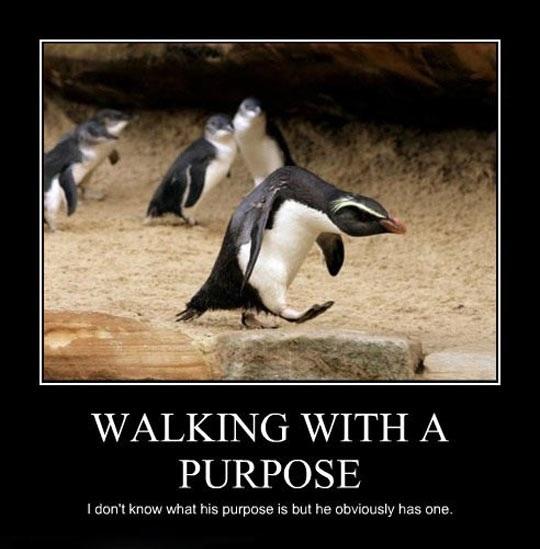 cool-penguin-walking-badass