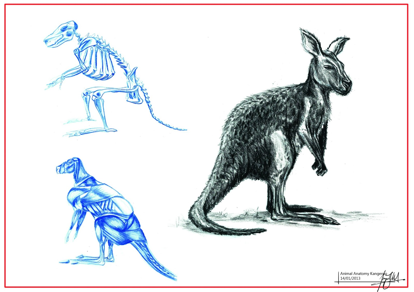 grandpriy: Animal Anatomy Studies