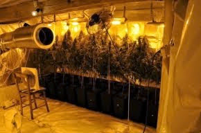 Полицаи откриха 108 саксии канабис в къща (снимки)
