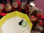 Hatching our chicks!