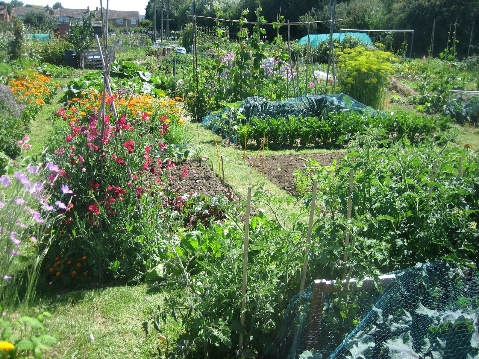 Vegetables and flowers mixed together in this wildlife friendly