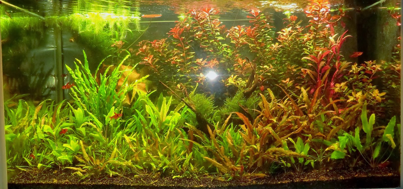 Fish, tank, aquarium, 250l, 66, gallons, planted,