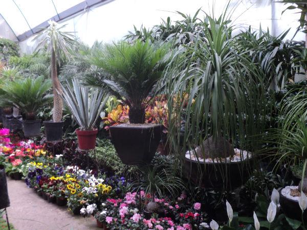 Palabralabra de compras en los viveros de coyoac n for Viveros y plantas