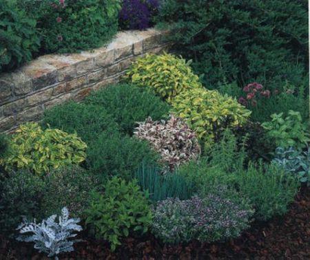 Il mio giardino aromatico - Piante aromatiche in casa ...