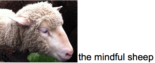 the mindful sheep