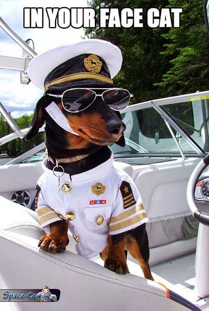 funny dog boat picture
