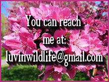 My e-mail