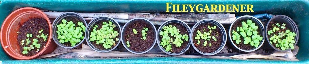 Fileygardener