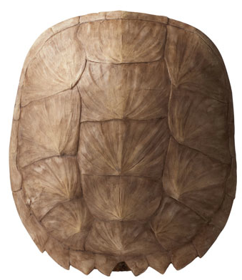 Decorating With Faux Tortoise Shells Driven By Decor