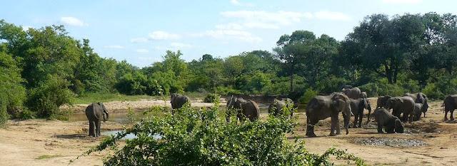 reserva de yankari nigeria