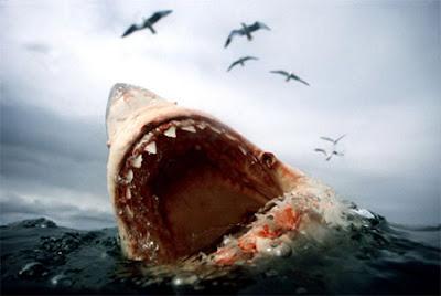 Hình Ảnh Diễn Viên Phim Cá Mập Ăn Thịt Người