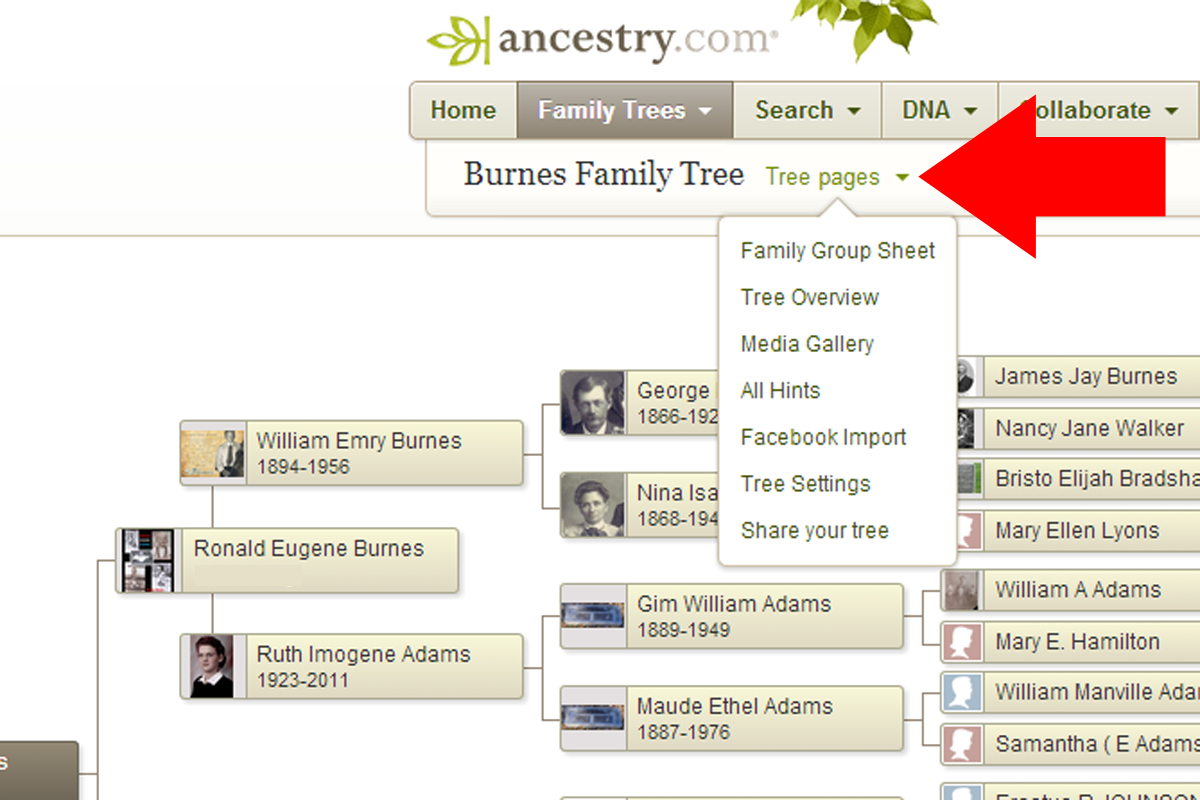 How To Export Your Family Tree From Ancestry Teach Me Genealogy