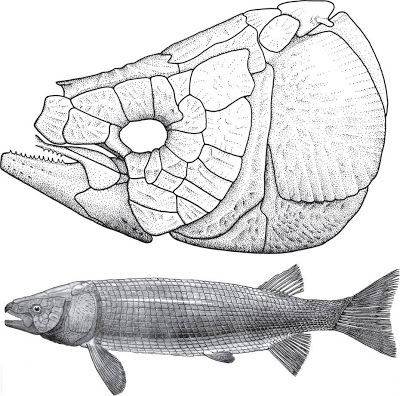Isanichthys