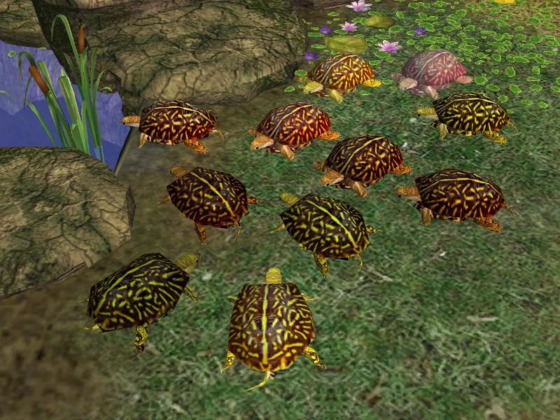 Theninthwavesims The Sims 2 Decorative Turtles Mesh