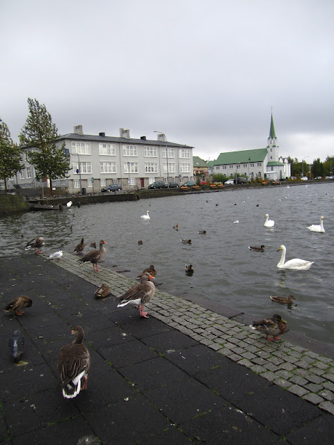 Pond with ducks in Reykjavik, Iceland.