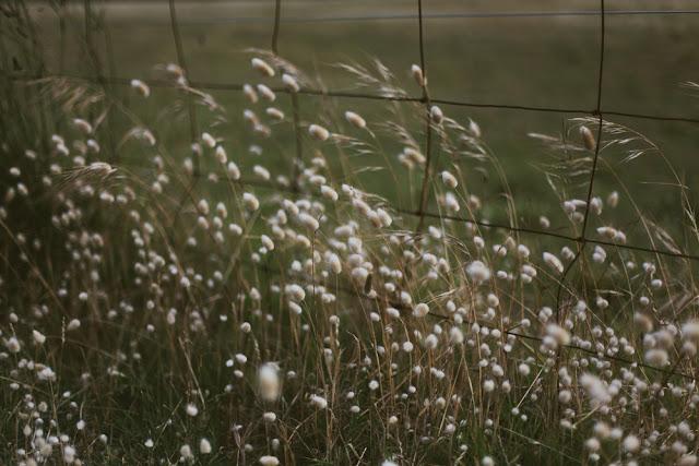 barwon heads flora