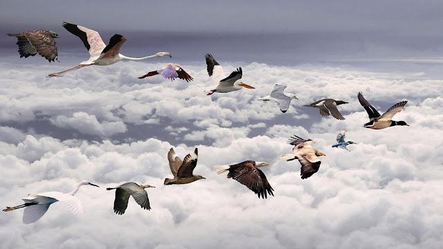 funny birds, birds, migrator