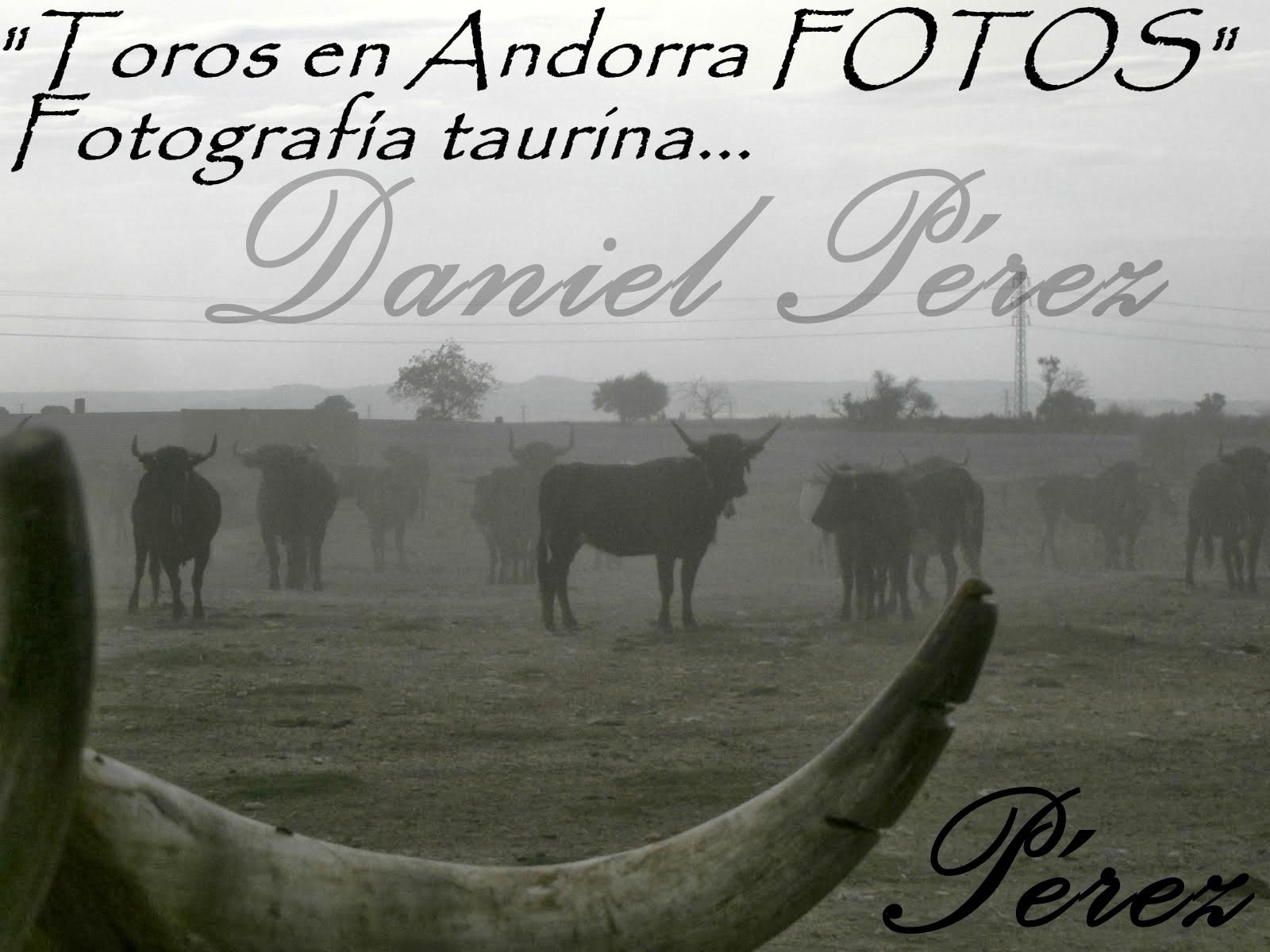 Toros en Andorra Fotos