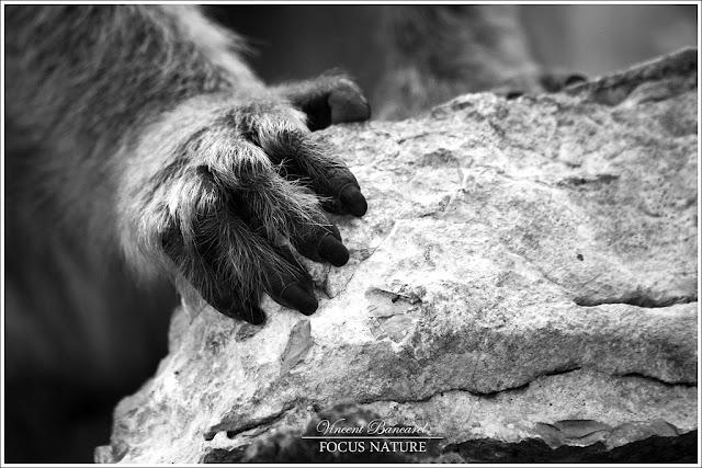 Focus nature l homme n est pas sup rieur l animal car - Vanite des vanites tout n est que vanite ...