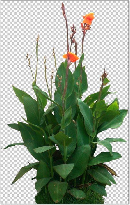 Recursos chele guada 67 arbustos y plantas de jardin en for Arbustos con flores para jardin