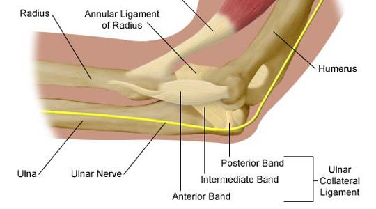 Medicina Deportiva: Lesión de Ligamento Colateral Medial de Cúbito o ...